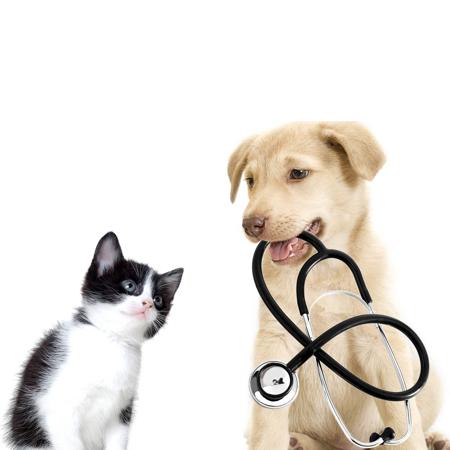 D & N Veterinary Clinic